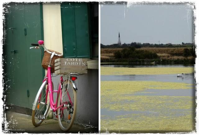 île de ré vélo et marais salant