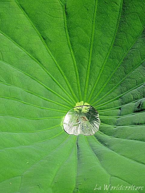 jardins des martels tarn france lotus