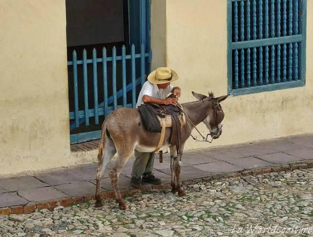 âne dans les rues de Trinidad Cuba
