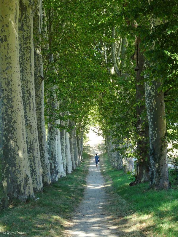 obélisque-naurouze-tourisme-haute-garonne