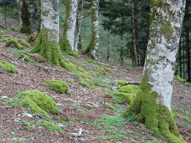 Rando du Lac Vert dans les Pyrénées