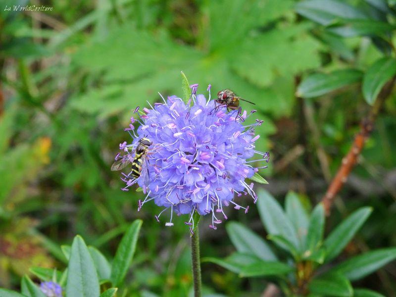 flore-montagne-randonnée-lac-vert