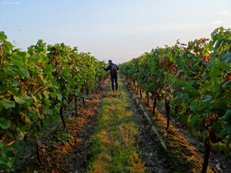 Oenotourisme en Haute Garonne tourisme dans le vignoble de Fronton