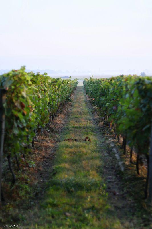 Oenotourisme en Haute Garonne domaine viticole de l'AOP Fronton