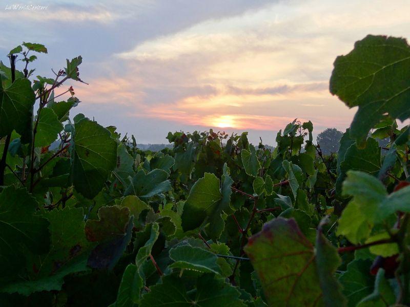Oenotourisme en Haute Garonne viti rando dans le frontonnais