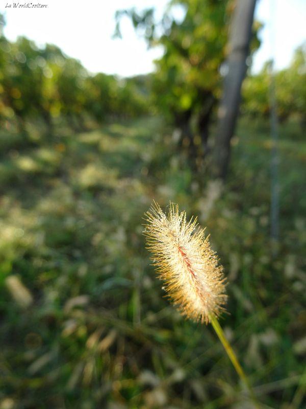 Oenotourisme en Haute Garonne visites guidées du vignoble de Fronton