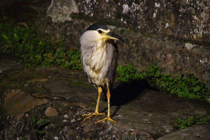 croisiere-canal-midi-observation-faune-heron
