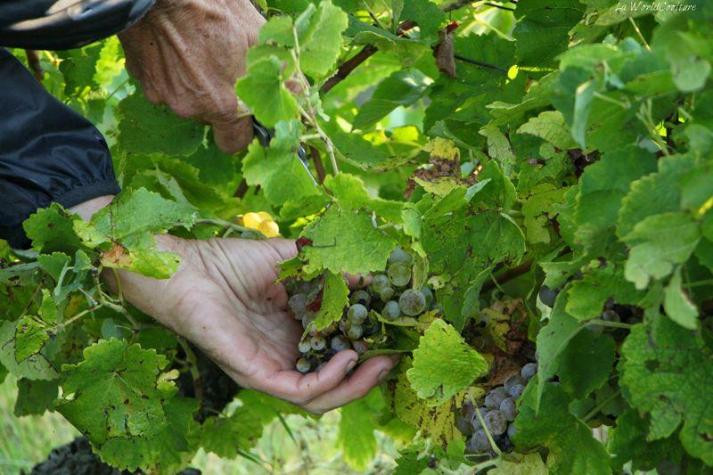 Oenotourisme en Haute Garonne visite guidée vignes du frontonnais
