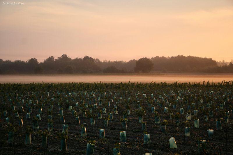Oenotourisme en Haute Garonne tourisme dans les vignes de Fronton