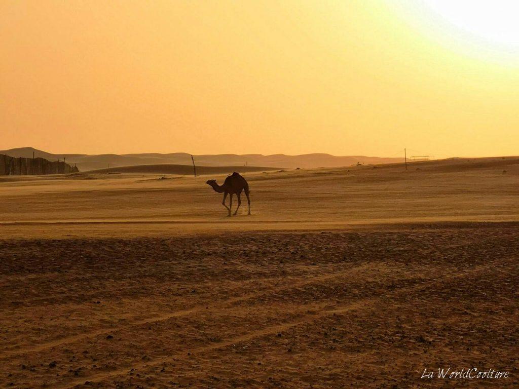 Que faire dans le désert de Wahiba Sands ?