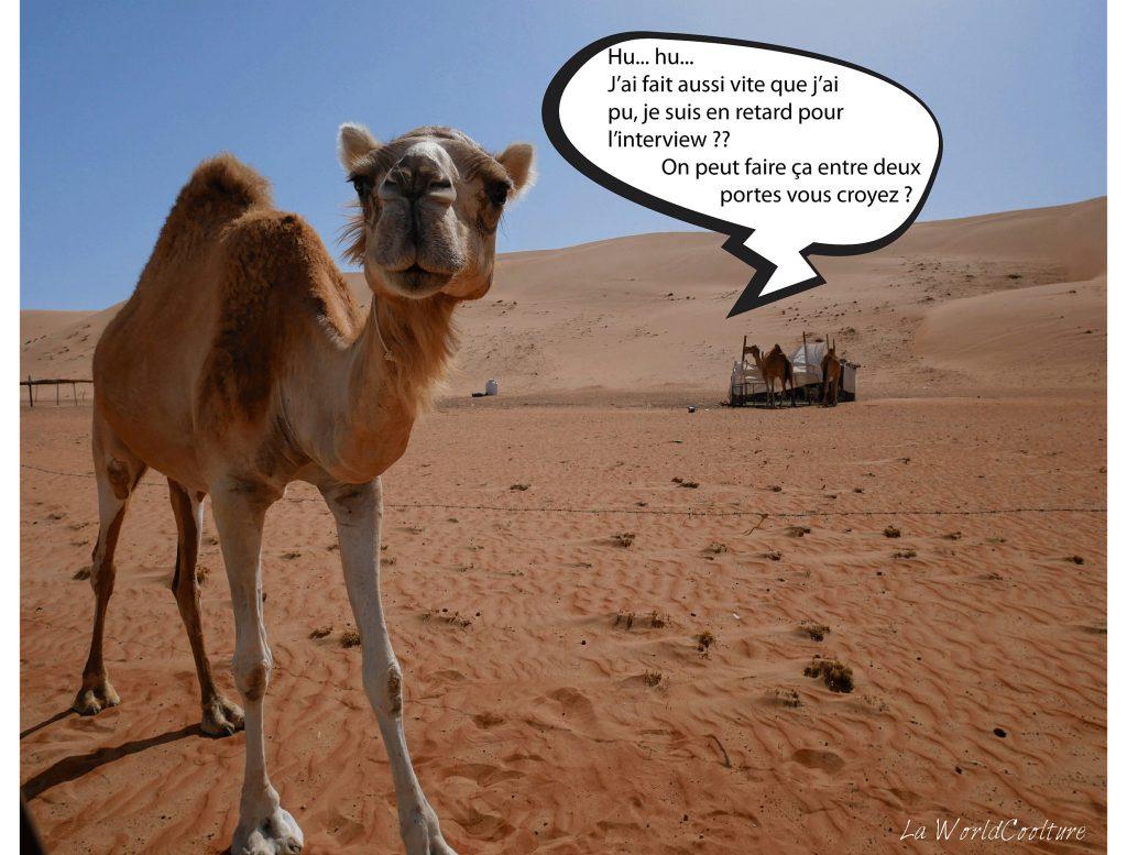 Balade à dos de dromadaire dans le désert de Wahiba Sands à Oman