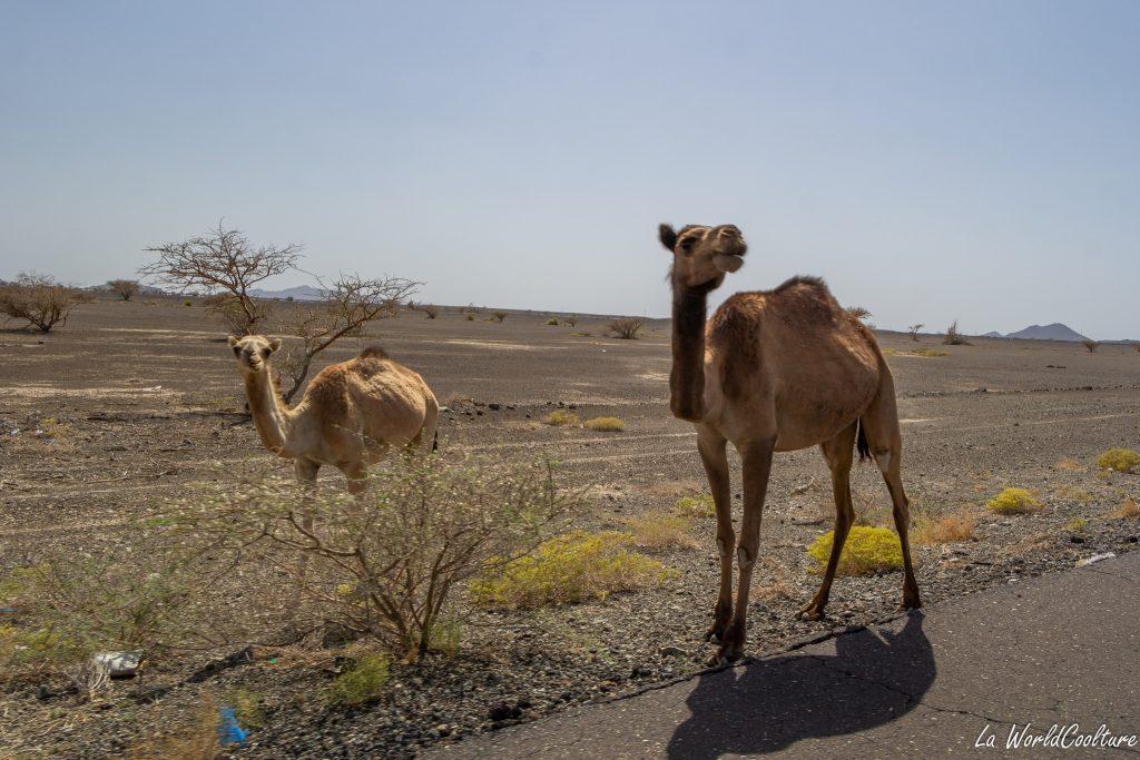 Comment entrer dans le désert de Wahiba Sands ?