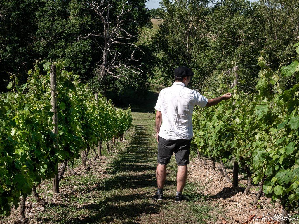 bons vignerons et viticulteurs 82 Tarn-et-Garonne Auvillar