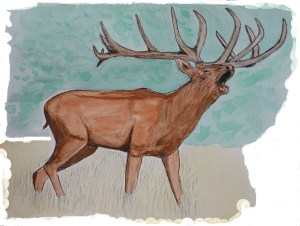 Où et quand assister au brame du cerf dans les Pyrénées de Haute-Garonne ?