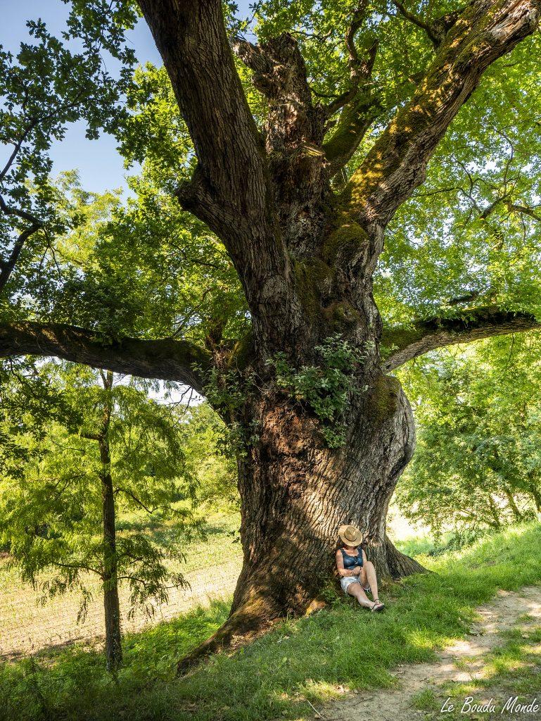arbre remarquable Tarn-et-Garonne